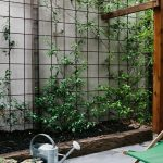 Reo mesh used for climbing plants. Pinned to Garden Design-Walls, Fences N...