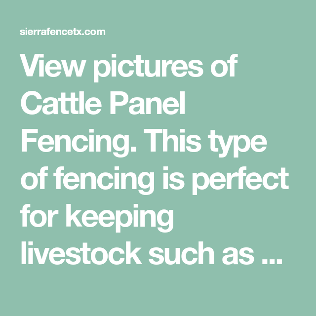 View pictures of Cattle Panel Fencing. This type of fencing is perfect for keepi...